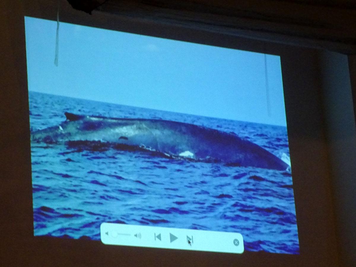 クジラ王国スリランカ スライドショー